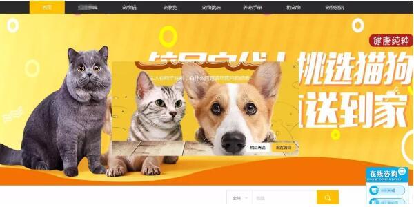 寵物網站怎么設計